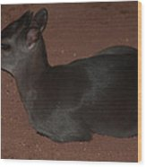Profile Of A Blue Duiker Wood Print