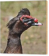 Profile Of A Brown Muscovy Duck Wood Print