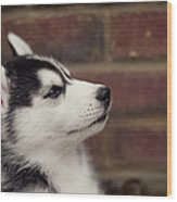 Profile Of A Husky Puppy Wood Print