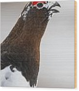 Profile Of A Male Willow Ptarmigan Wood Print