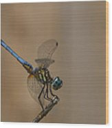 Profile Of The Dragonfly Wood Print