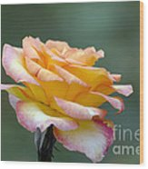 Profile View Yellow And Pink Rose Wood Print
