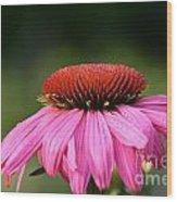 Profiling Echinacea Wood Print