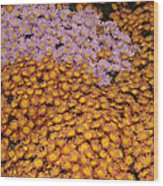 Profusion In Yellows Pinks And Oranges Wood Print