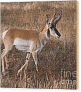 Pronghorn Antelope 2 Wood Print