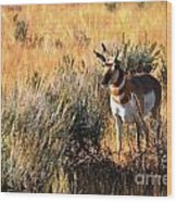 Pronghorn Buck Wood Print