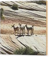 Pronghorn Deer Wood Print