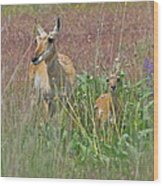 Pronghorn Doe And Fawn Wood Print