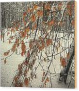 Prospect Park Winter Scene Wood Print