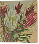 Protea Bunch Wood Print