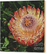 Protea Flower 2 Wood Print