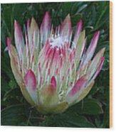 Protea Flower Wood Print