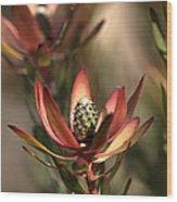 Protea  Wood Print