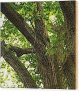 Protection Wood Print