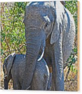 Protective Mother Elephant In Kruger National Park-south Africa Wood Print