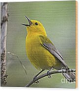 Prothonotary Wabler Wood Print