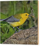 Prothonotary Warbler Wood Print