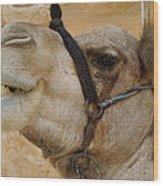 Proud Bou Bou Camel Sinai Egypt Wood Print