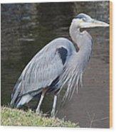 Proud Great Blue Heron Wood Print
