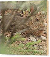 Proud Hare Wood Print