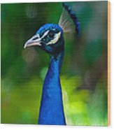 Proud Peacock Wood Print
