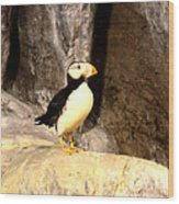Proud Puffin Wood Print