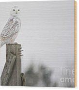 Proud Snowy Owl Wood Print