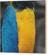 Proud Yellow Wood Print