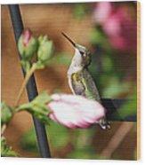 Proudful Little Hummingbird Wood Print