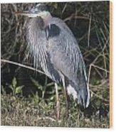 Pround Blue Heron Wood Print