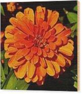 Proven Winners Flower Wood Print