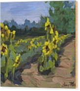 Provence Sunflower Field Wood Print