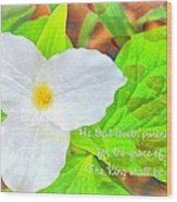 Proverbs 22 11 Wood Print