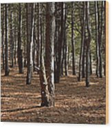 Provin Trails Park Forest Wood Print