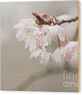 Prunus Hirtipes Wood Print