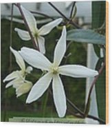 Psalm Eighteen Two White Clematis Wood Print