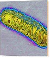 Pseudomonas Bacterium Wood Print
