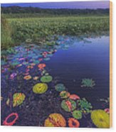 Psychedelic Shore - Great Meadows Nwr Wood Print by Sylvia J Zarco