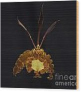 Psychopsis Mariposa  4446 Wood Print