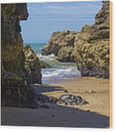 Pt Reyes National Seashore Wood Print by Bill Gallagher