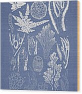 Pterosiphonia Fibrillosa Wood Print