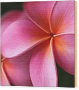 Pua Lei Aloha Cherished Blossom Pink Tropical Plumeria Hina Ma Lai Lena O Hawaii Wood Print
