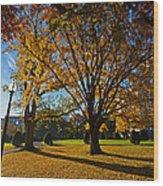 Public Garden Fall Tree Wood Print