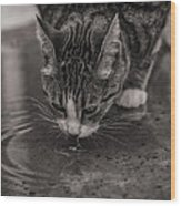 Puddle Drinking Kitty Wood Print