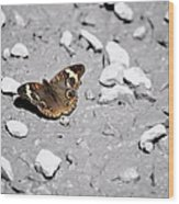 Puddling Butterfly 8766 Wood Print