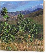 Puerto Rico Cayey Mountains Near Salinas Wood Print