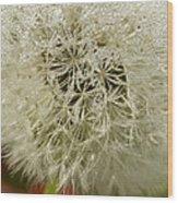 Puff Dandelion Wood Print