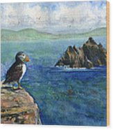 Puffin At Skellig Island Ireland Wood Print