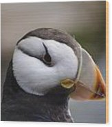 Puffin Head 3 Wood Print