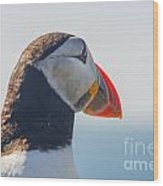 Puffin In Close Up Wood Print